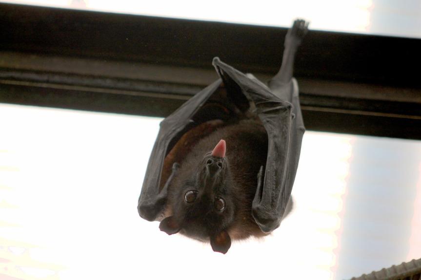 bat-1268650_1280